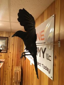 Crow Side View 2