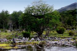 Ushuaia: Tierra del fin del mundo