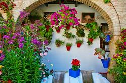 Córdoba: Belleza patios