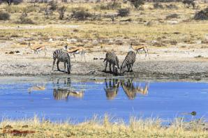 Namibia: De Safari