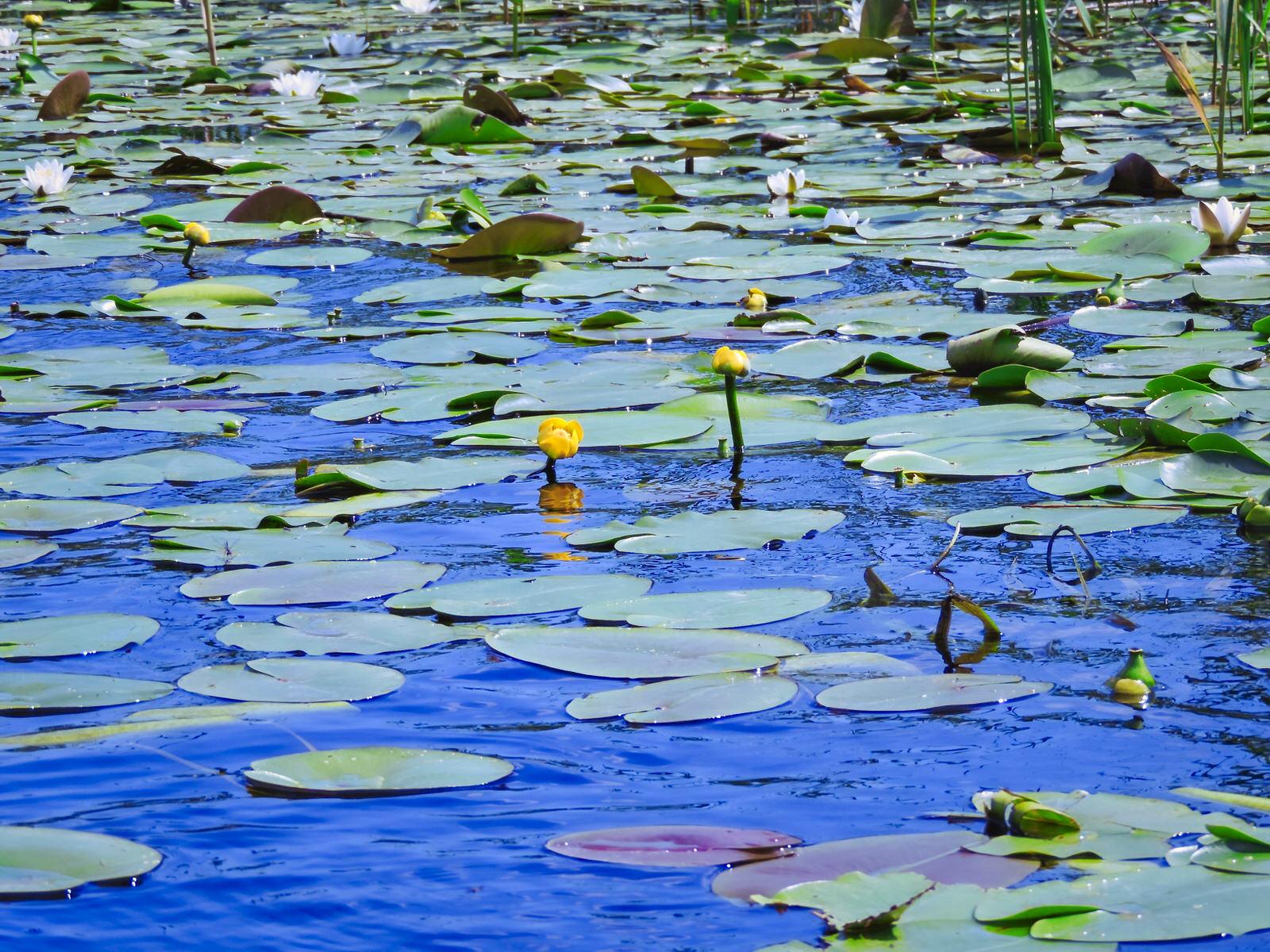 Rumania: Delta del Danubio