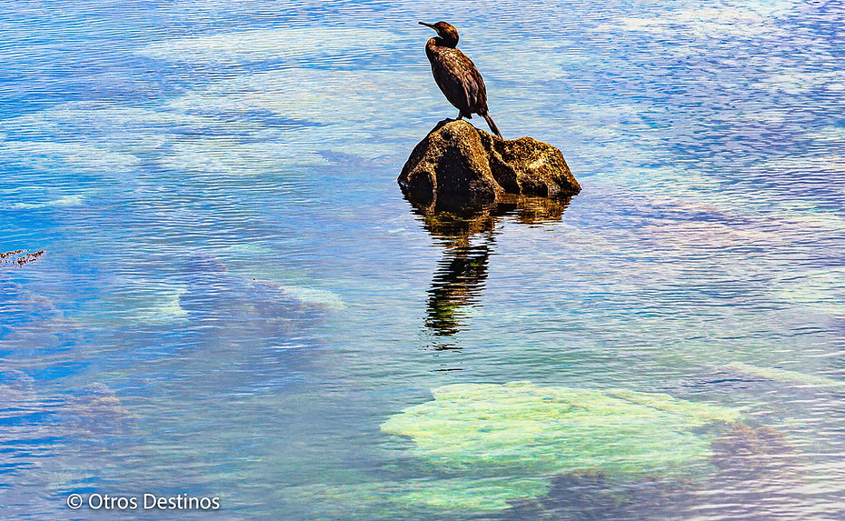 isla cies cormoran.jpg