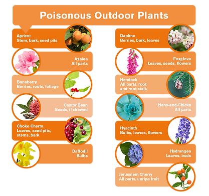 Poisonous Outdoor Plants and Easter Haza