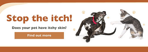Web Banner - Skin Itchiness Lincoln-01 (