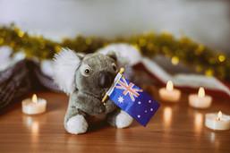 Close up A koala bear with an Australian