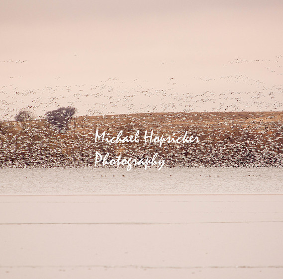 The Flock (1 of 1) m.jpg