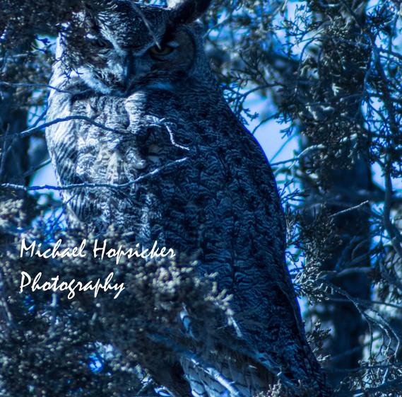 Night Owl (1 of 1) m.jpg