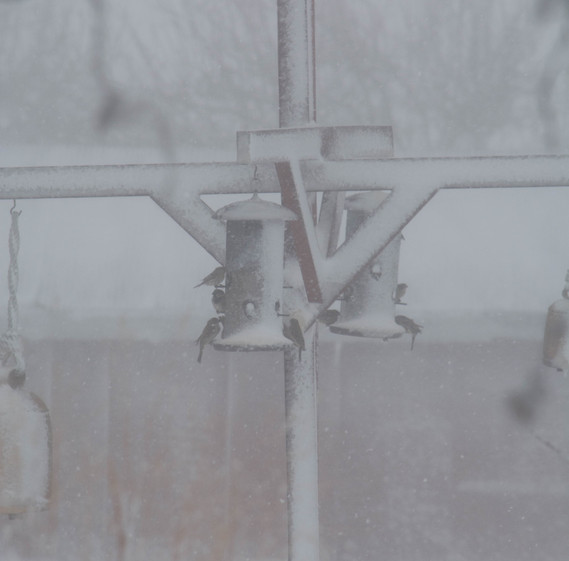 Cyclone Blizzard II-0071 m.jpg