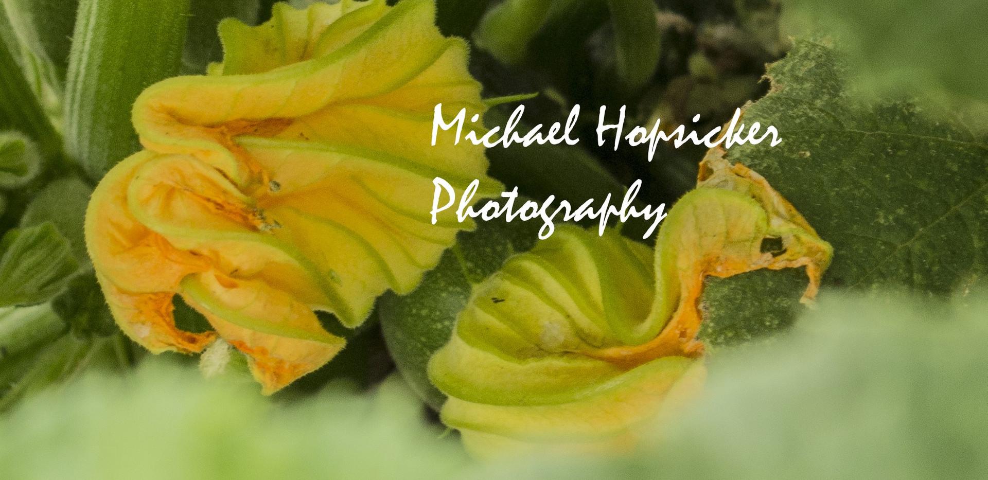 Zucchini Flowers m.jpg
