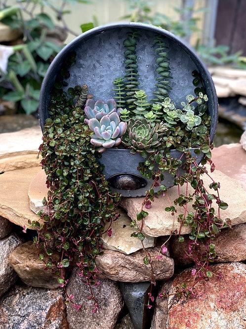 Succulent wall pocket