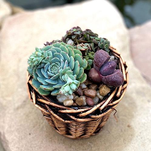 Succulent basket with split rock