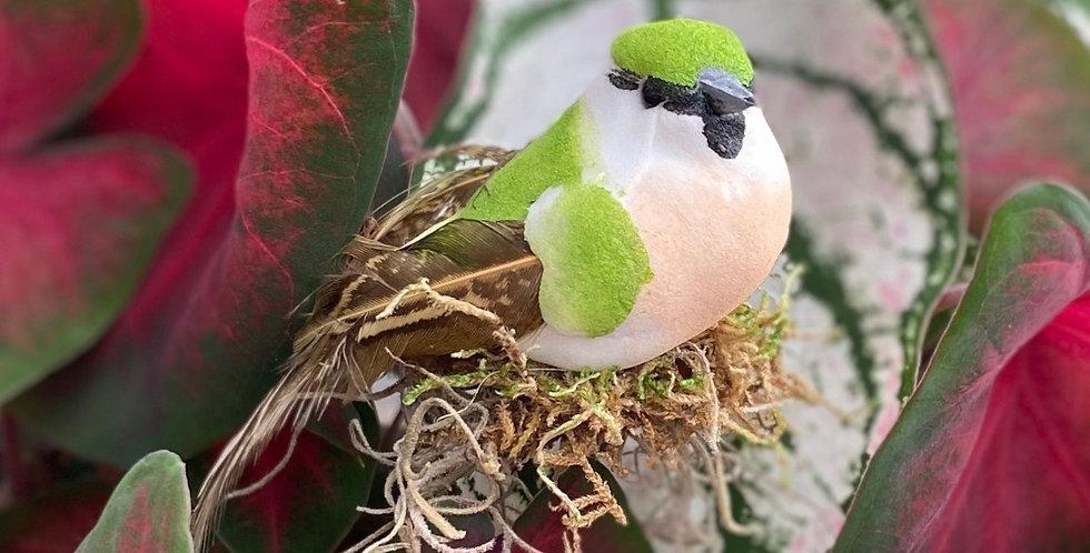 Green Moss Bird