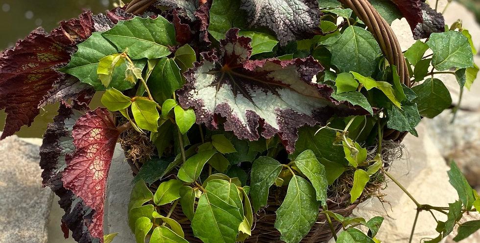 Rex Begonia & Grape LeafIvy in Willow Basket