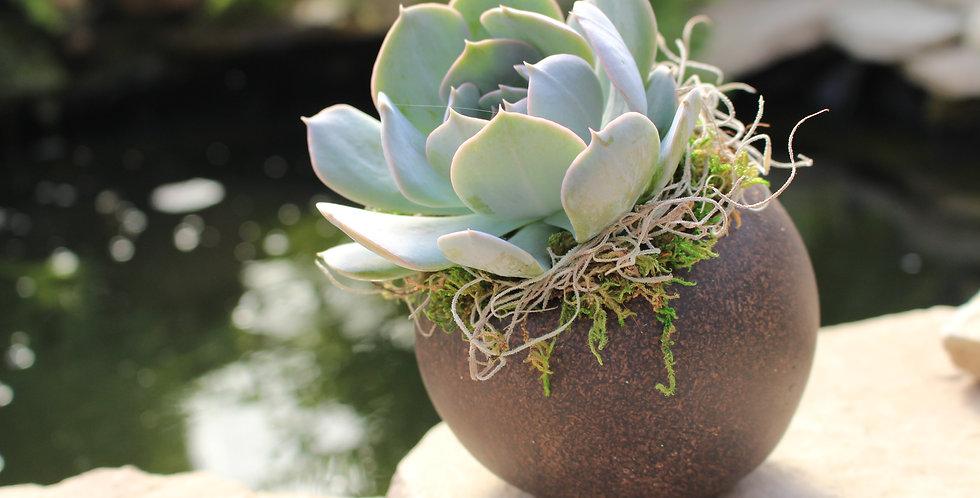 Succulent in Orb Planter
