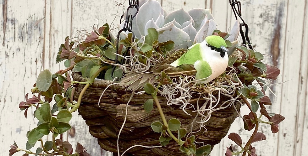 "Little Succulent Hanging Basket w/ Bird (4"" diameter)"