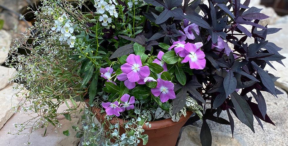 """Black & Lavender Patio 10"""" Pot"""