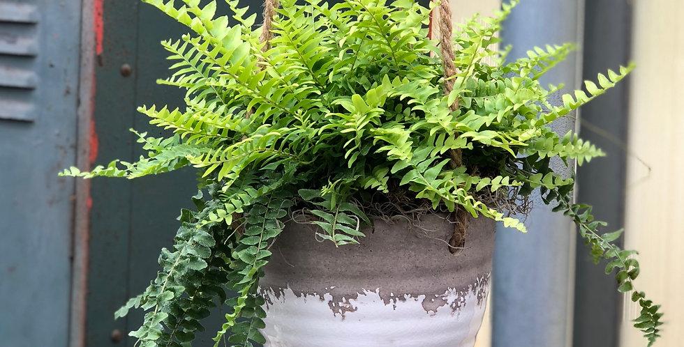 Ceramic Hanging Fern Pot