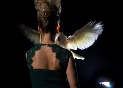 Hémène De Vallombreuse Perroquet