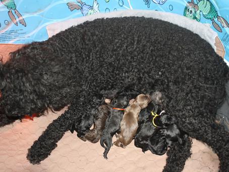 Aquamarine Puppies 2011