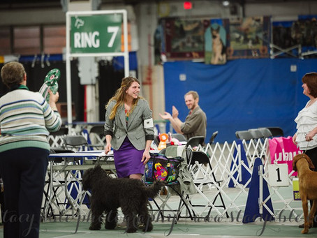 First Biscay Barbet to win Best In Open Show AKC
