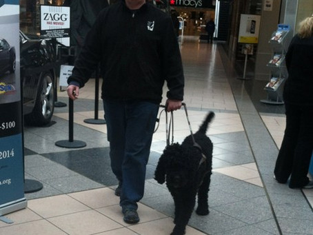 First Biscay Barbet Guide Dog for the Blind