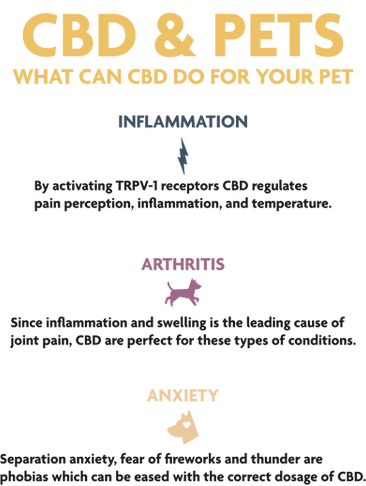 KH.Infographic.Pets.2.png