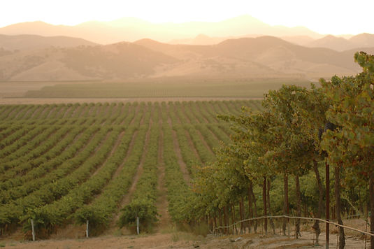 San Bernabe Vineyard Photo.jpg