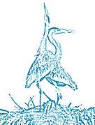 Heron's Nest - Shallotte NC