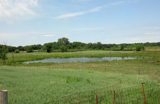 Pond 1-summer-20130720.jpg