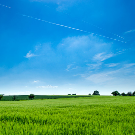 Field Grassy.jpeg
