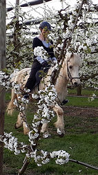 Kirschenblüten.jpg