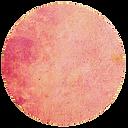 rosa 3.png