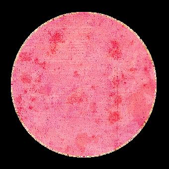 rosa 2.png