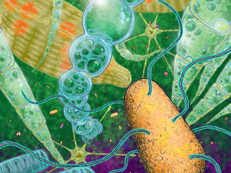Teaching microbiology through visual, artistic, and plot-driven storytelling