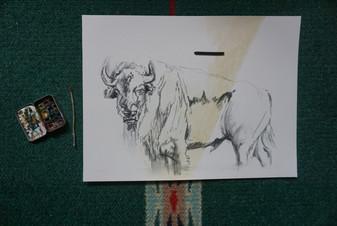Bison Progress