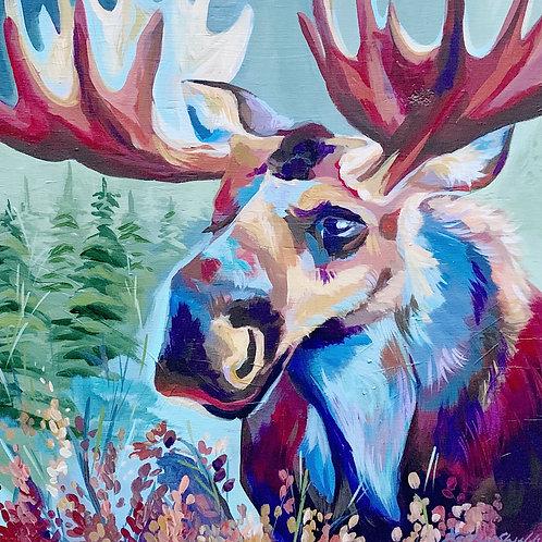 "Spring Moose Fine Art Print 12""x12"""
