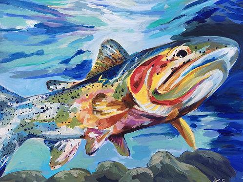 "Rainbow Trout  11""x14"""