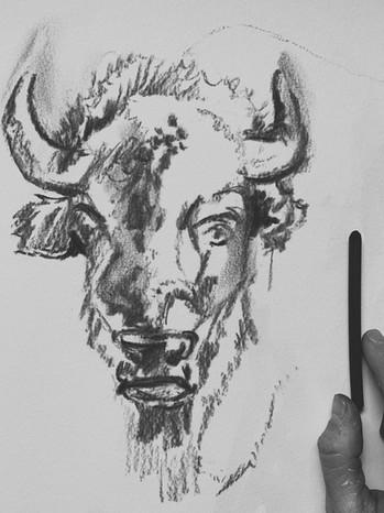 Bison in Progress