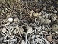 cambodia killing fields.jpg