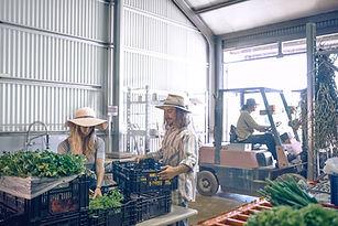 Armazém de agricultores