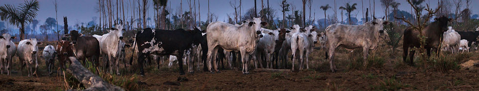 Grazing the Amazon.jpg