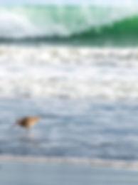 Drake sea.jpg