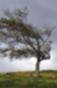 the wind dies.jpg