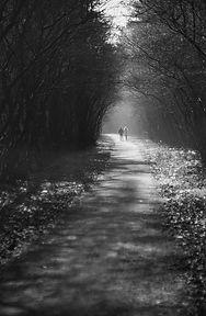 dark trail.jpg