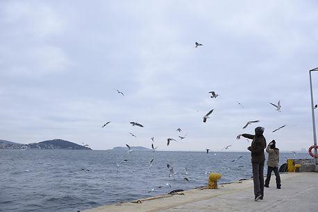 A Ferry Tale2.jpg