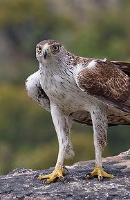 Death of eagles2.jpg