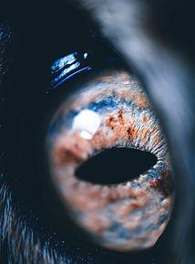 The pupil.jpg