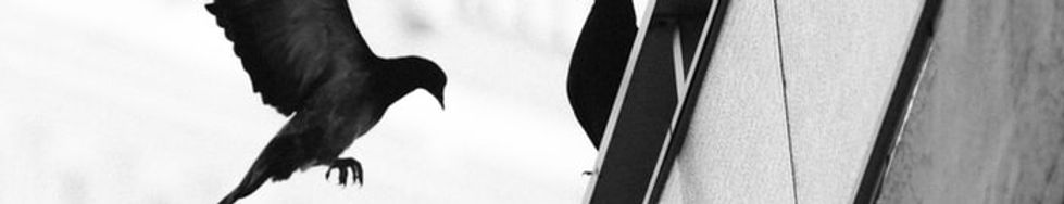 inner crow 2.jpg