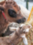 Petting2.jpg
