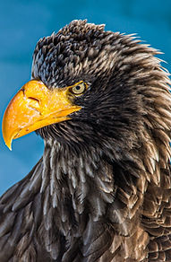 The sight of an eagle.jfif